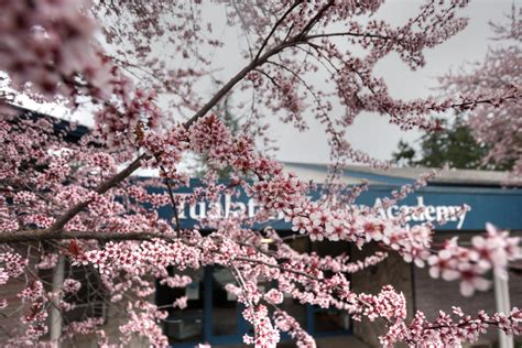 tualatin valley academy 757 | 20160323 0001