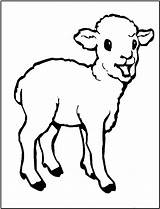 Sheep Coloring Pages Print Printable sketch template