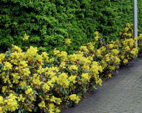 schöne pflanzen für den garten immergr 252 ne pflanzen die ihrem garten charme vermitteln