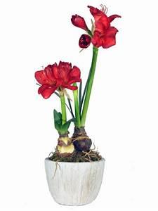 Blühende Zimmerpflanzen Pflegeleicht : zimmerpflanzen pflegeleicht und auch f r anf nger geeignet ~ Michelbontemps.com Haus und Dekorationen