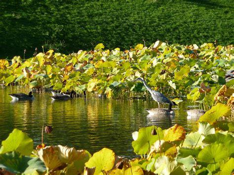 le bureau heron parc hé dans le parc floral de côté jardin