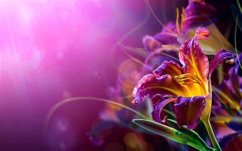 violet flower hd desktop wallpapers  hd