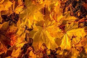 Schöne Herbstbilder Kostenlos : herbst bilder blog ~ A.2002-acura-tl-radio.info Haus und Dekorationen