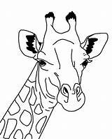 Coloring Giraffes Giraffe Pages Again Bar Looking Case Don sketch template