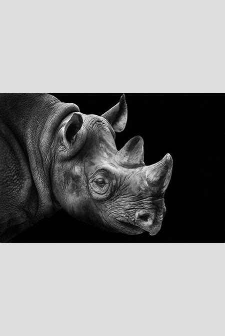 The art of animals by Wolf Ademeit   Dodho Magazine