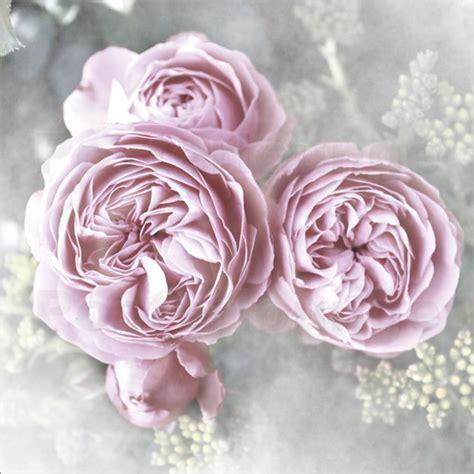 Bilder Shabby Style by Christine B 228 Ssler Roses Shabby Style Poster Posterlounge