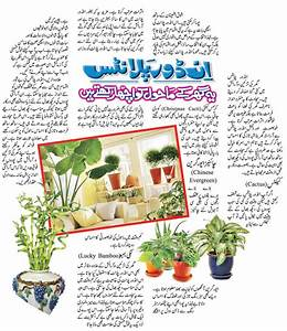 Indoor Plants At Home Makes You Feel Better   Pakistan ...