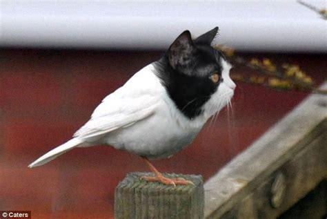 bird cat