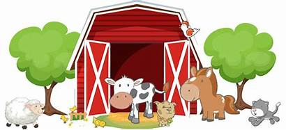 Barn Animals Riverdale Kidds Coon