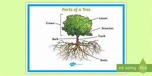 Parts Of A Tree Poster