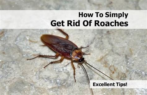 rid  cockroaches effective methods    apply