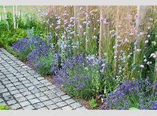 Lavender Hidcote, Verbena Bonariensis, Eryngium Bourgatii