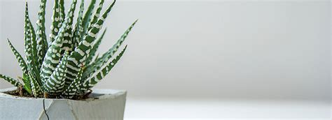 Growing Stunning Terrariums Bioadvanced