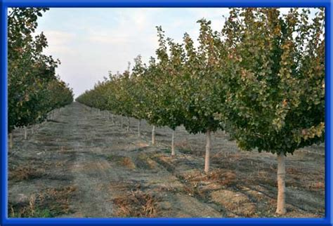 water changers  photo gallery orchards  vineyards