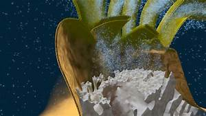 Video  How Do Corals Build Reefs