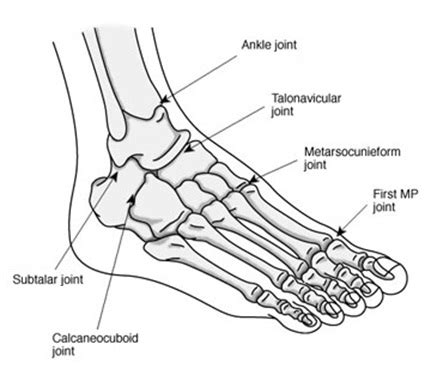 Diagram of the Foot and Ankle Joints