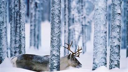 Winter Nature Animals Snow Desktop Backgrounds Deer