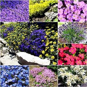 Blumen Für Steingarten : steingarten stauden mischung polsterstauden 100 samen kaufen ~ Markanthonyermac.com Haus und Dekorationen