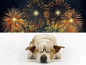 Fireworks Tips for Dogs | A Letter To My Dog