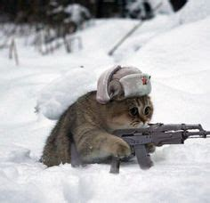 cat gun 1000 images about cats with guns on guns