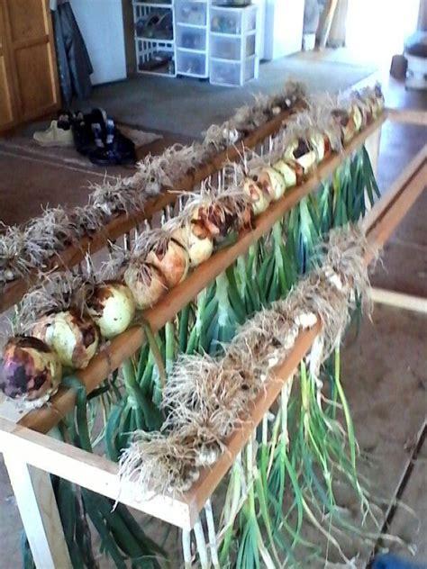 drying rack jim   dry onions  garlic