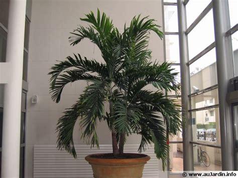 la culture des plantes d 39 intérieur en hiver