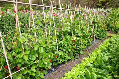 picture of a vegetable garden intensive vegetable gardening nana s garden gate