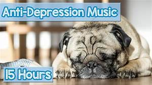 new soothing music for depressed dogs and puppies music With anti anxiety dog music