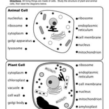 animal  plant cells worksheet classical conversations