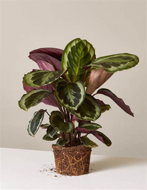 jenis jenis tanaman hias indoor outdoor harga tanaman