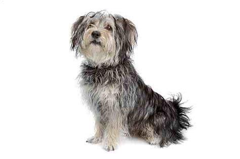 popular dog breeds  ireland small dogs large dogs petmania