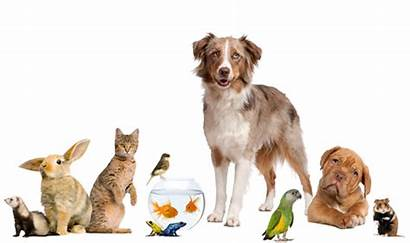 Pets Different Pet Dogs Specialties Let Dog