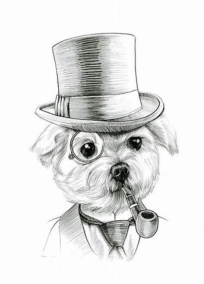 Maltese Dog Drawing Drawings Dogs Tattoo Illustration
