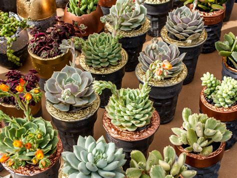 4 Reasons for Succulent Plants Wilting | World of Succulents