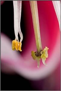 Bleeding Heart Flower Reproduction