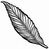 Feather Line Drawing Clipart Getdrawings sketch template