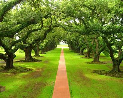 Tree Trees Around Nature Grass Landscapes Natural