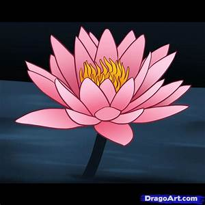 How to Draw a Water Lily, Step by Step, Flowers, Pop ...