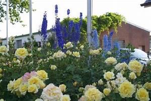 Rosenbeet Mit Stauden : bl tenstauden als rosenbegleiter mein sch ner garten ~ Frokenaadalensverden.com Haus und Dekorationen