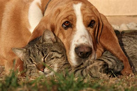 dogs   good  cats breeds  tend