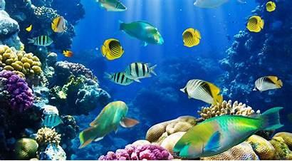 Fish Desktop Background Pc Mobile Underwater Latest