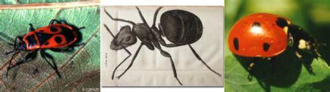 was fressen ameisen was fressen unsere ameisen