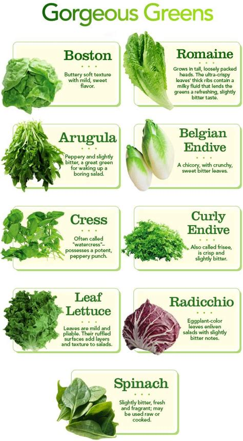kinds of lettuce greens differnt types of lettuce and other salad greens fyi simply food pinterest different
