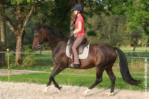 Sattel Pferd Anpassen