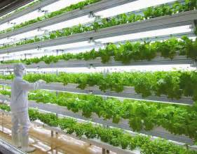 Indoor Herb Garden Light by Hydroponics Technology Hydroponic History Weibo Cambodia
