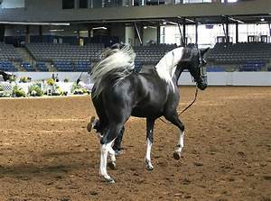 13 best images about Pinto Horses Dream Horse on Pinterest ...