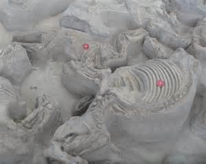 file ashfall fossil beds teleoceras and cormohipparion