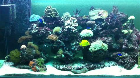 aquarium noyelles sous lens aquarium eau de mer complet 28 images aquarium eau de mer aquarium r 233 cifal eau de mer