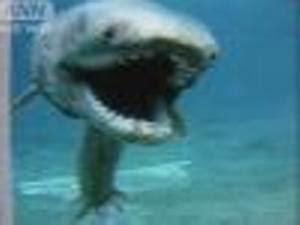 サメ ちゃん 前世