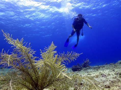 Cozumel Dive Cozumel Discover Scuba Dive And Buggy Island Tour